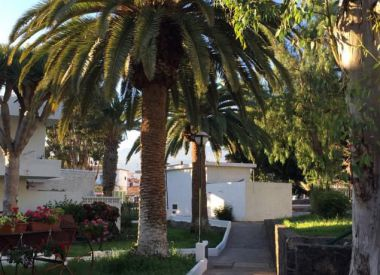 Apartments in the Costa del Silencio (Tenerife), buy cheap - 79 000 [66063] 9